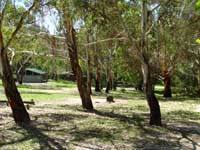 Woods Reserve - Redcliffe Tourism