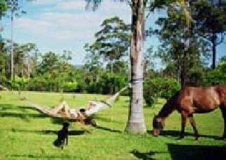 Neds Bed Horse O Tel - Redcliffe Tourism