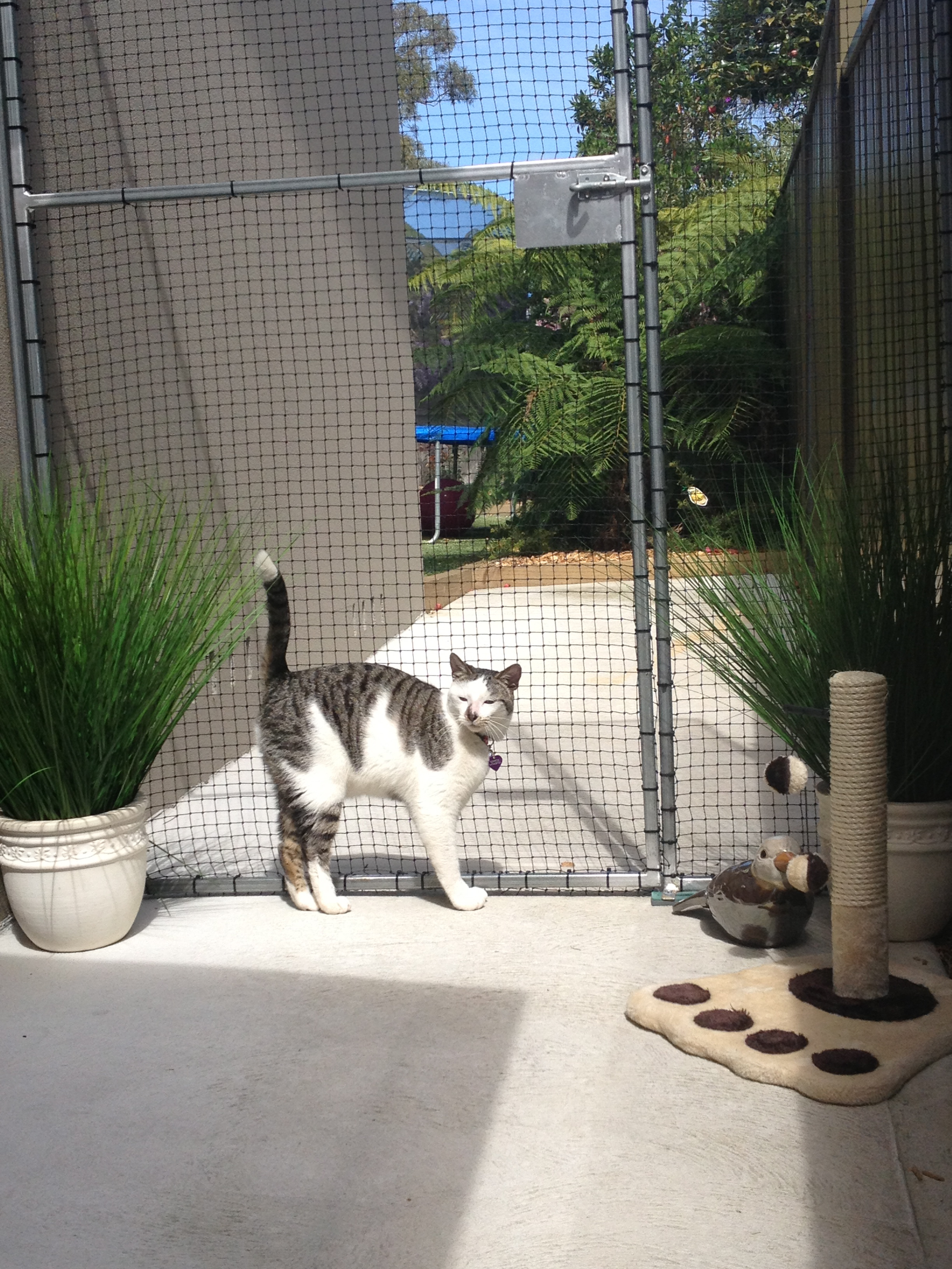 Caringbah Cat Hotel - Redcliffe Tourism