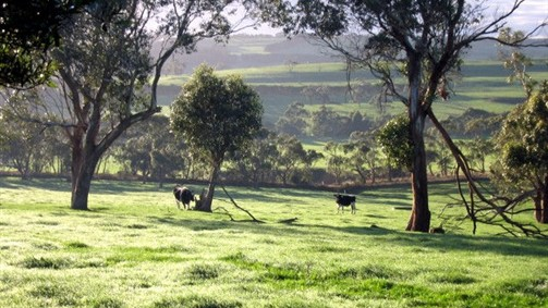 Bellevue Farmstay - Redcliffe Tourism