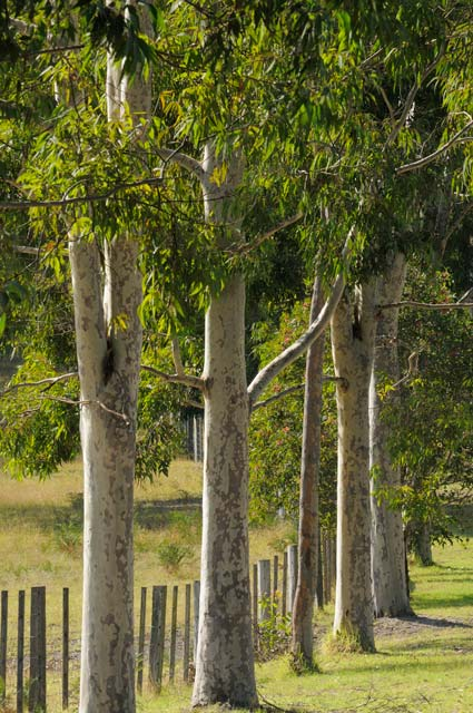 Stringybark Cottages - Redcliffe Tourism