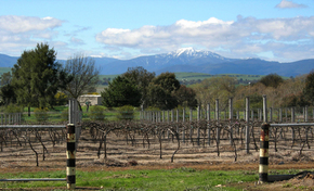 Buller View Wines - Redcliffe Tourism