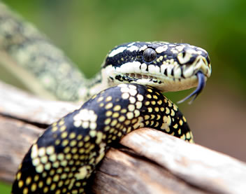 Reptile Encounters - Redcliffe Tourism