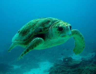 Snorkel Safari Brisbane - Redcliffe Tourism