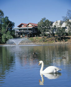 White Swans - Redcliffe Tourism