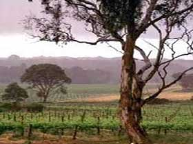 Yangarra Estate Vineyard - Redcliffe Tourism