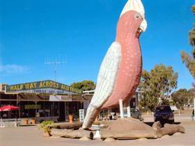 The Big Galah - Redcliffe Tourism