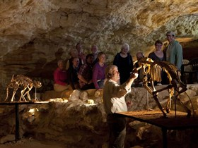 Naracoorte Caves National Park - Redcliffe Tourism