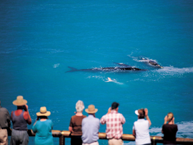 Whale Watching At Head Of Bight - Redcliffe Tourism