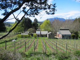 Wilmot Hills Vineyard - Redcliffe Tourism