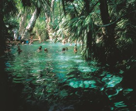 Mataranka Thermal Pool