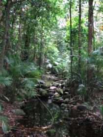 Mossman Gorge Rainforest Circuit Track Daintree National Park - Redcliffe Tourism