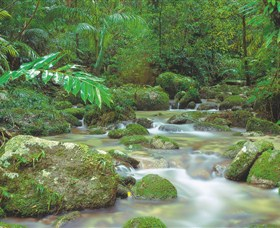 Mossman Gorge Daintree National Park - Redcliffe Tourism