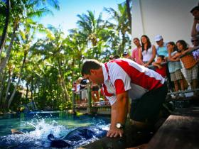 The Living Reef on Daydream Island - Redcliffe Tourism