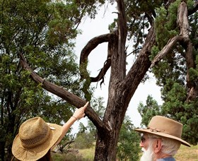 Charleville - Outback Native Timber Walk - Redcliffe Tourism