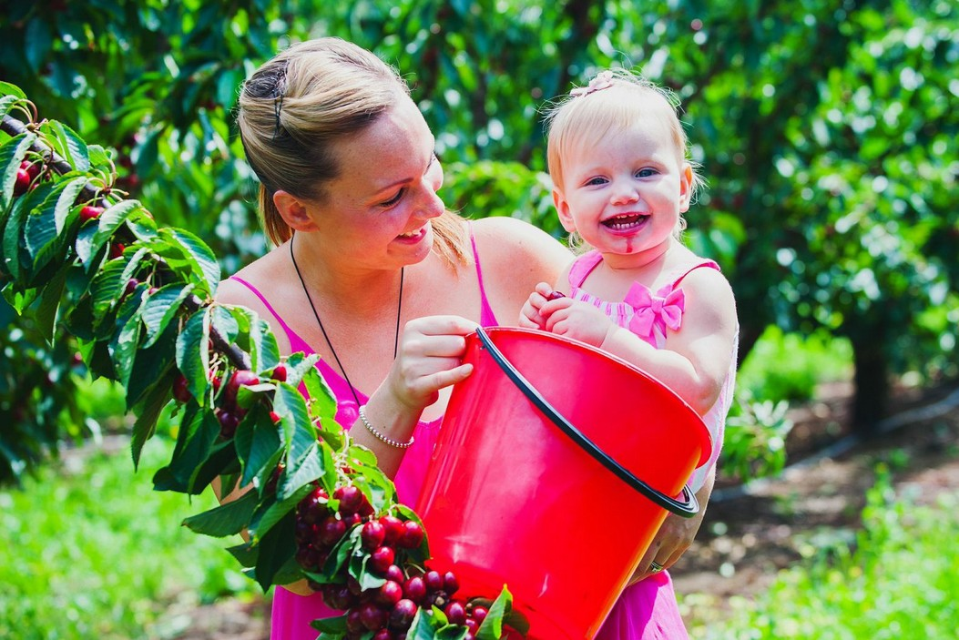 Cherryhill Orchards - Redcliffe Tourism