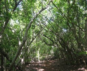 Eucalypt Trail - Redcliffe Tourism