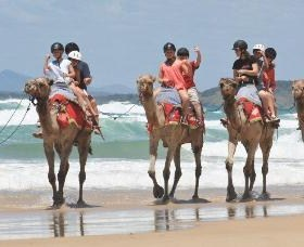 Camel Rides with Coffs Coast Camels - Redcliffe Tourism