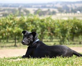 Moothi Estate Vineyard and Cellar Door - Redcliffe Tourism