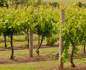 Mt Coghill Vineyard - Redcliffe Tourism