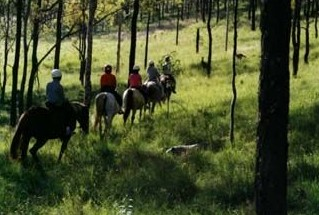 Hunter Valley Horse Riding and Adventures - Redcliffe Tourism
