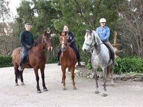 Academy of Dressage - Redcliffe Tourism