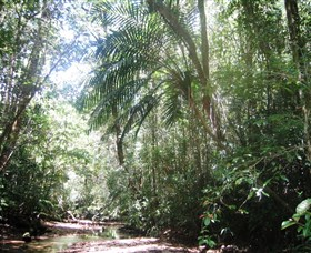 Mount Lewis National Park - Redcliffe Tourism
