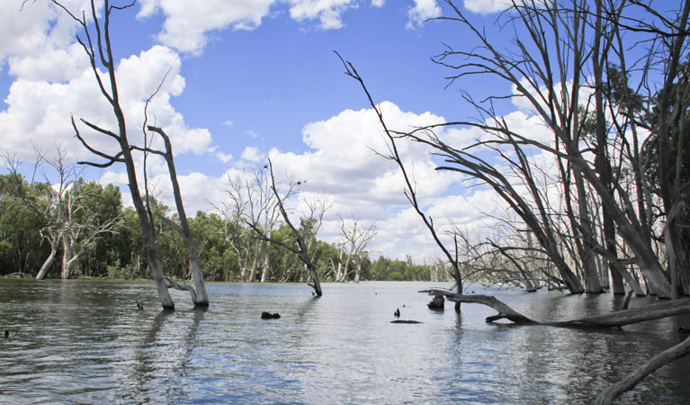 Murrumbidgee Valley National Park - Redcliffe Tourism