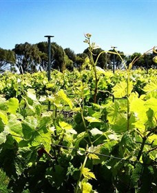 Basalt Wines - Redcliffe Tourism