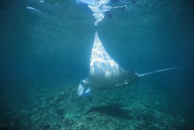 Manta Ray Bay Dive Site - Redcliffe Tourism
