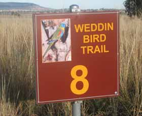 Weddin Bird Trails - Redcliffe Tourism