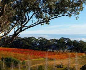Bloodwood Estate - Redcliffe Tourism