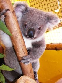 Cooberrie Park Wildlife Sanctuary - Redcliffe Tourism