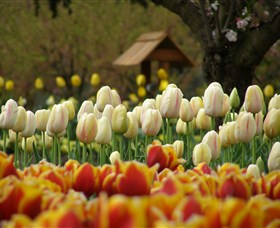 Tulip Top Gardens - Redcliffe Tourism