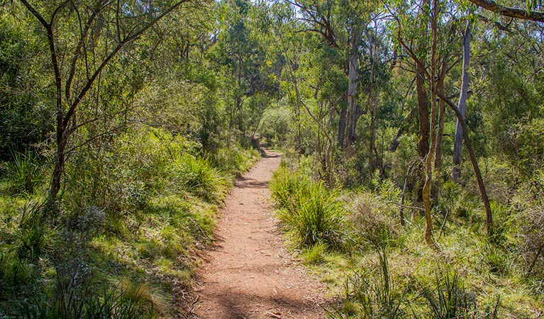 Mares Forest Creek walking track - Redcliffe Tourism