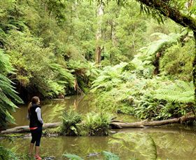 Morwell National Park - Redcliffe Tourism