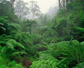 Tarra Bulga National Park