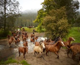 Glenworth Valley Horse Riding - Redcliffe Tourism