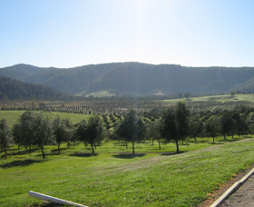 Hastings Valley Olives - Redcliffe Tourism