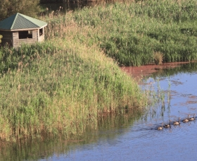 Spring Creek Bird Hide - Redcliffe Tourism