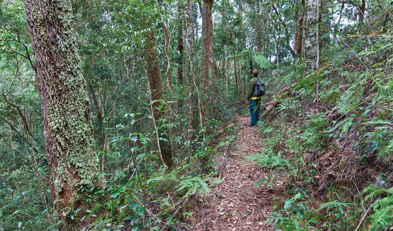 Blackbutt walking track - Redcliffe Tourism