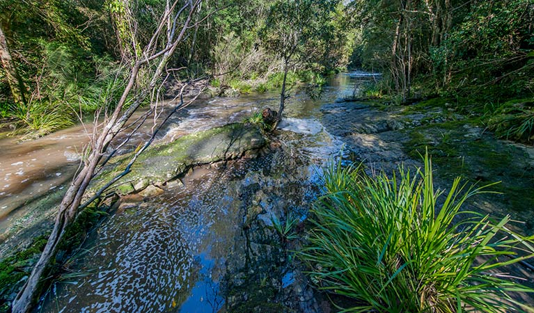 Dawson River walking track - Redcliffe Tourism