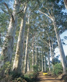 The Great Forest Trees Drive - Redcliffe Tourism