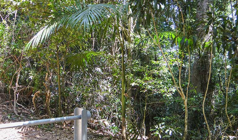 Goorgana walking track - Redcliffe Tourism