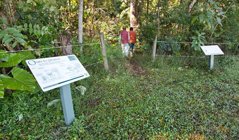 Rainforest walk - Redcliffe Tourism