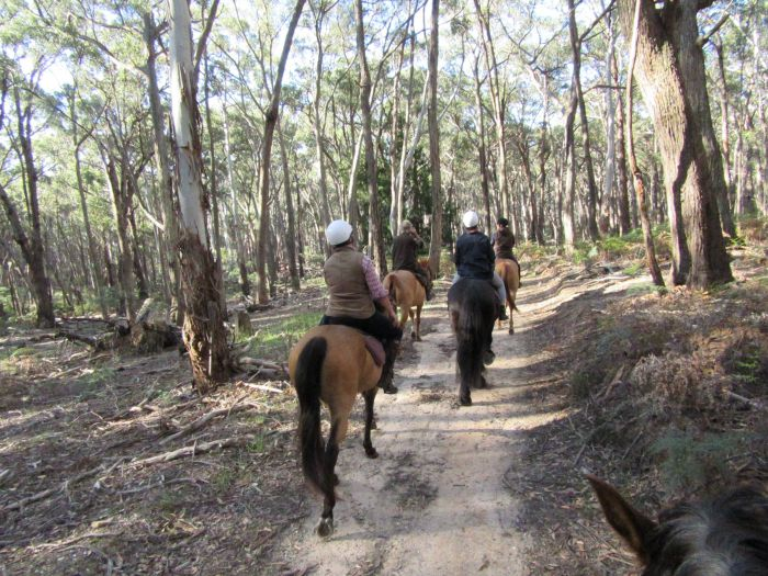 Silver Brumby Trails - Redcliffe Tourism