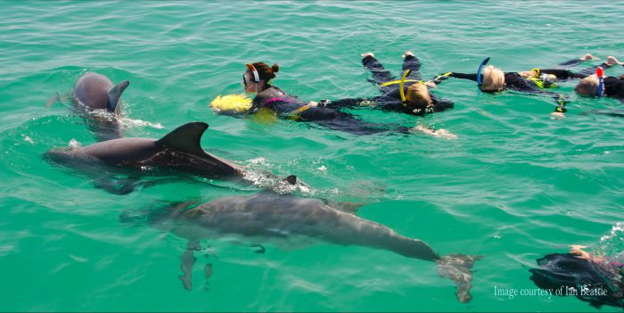 Rockingham Wild Encounters - Swim with Wild Dolphins