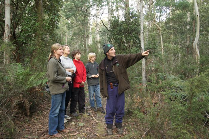 Great Western Tiers Forest Walks Tasmania - Redcliffe Tourism