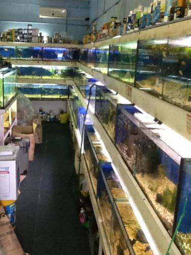 Clearwater Aquariums - Redcliffe Tourism