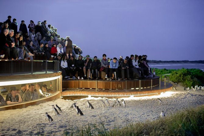 1 Day Private Phillip Island Tour VIP Charter up to 9 People - Redcliffe Tourism